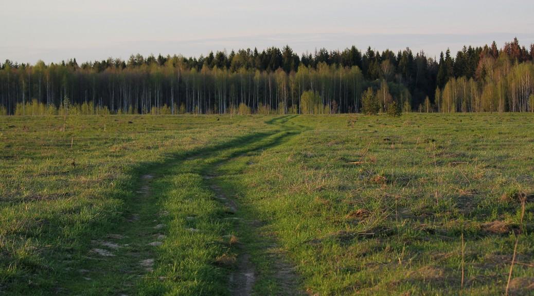 Как же мила моему сердцу эта утекающая к лесу дорога